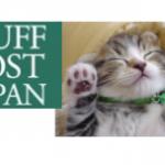 「ハフポで猫が見たい」ではなく「猫が見たい」だけ:バイラルメディア3つの問題点【The Media②】